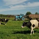 Гранты для семейных ферм