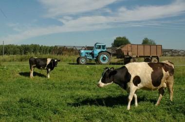За 9 месяцев объем инвестиций в агропромышленный комплекс  Подольска составил более полумиллиарда рублей