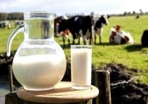За 9 месяцев 2019 года объем производства молока в Городском округе Подольск составил 4800 тонн
